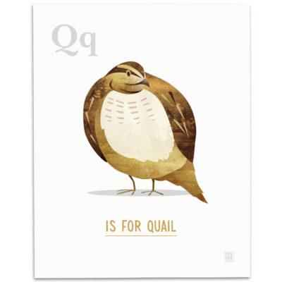 ABC-Animal-Alphabet-Print-Q-Mark-Bird-Illustration