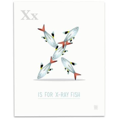 ABC-Animal-Alphabet-Print-X-Mark-Bird-Illustration